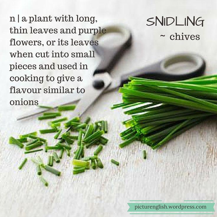 Chives / Snidling
