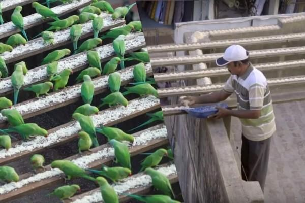 The Birdman of Chennai - Indian Man Feeds 4,000 Parakeets Every Single Day - http://www.odditycentral.com/news/the-birdman-of-chennai-indian-man-feeds-4000-parakeets-every-single-day.html
