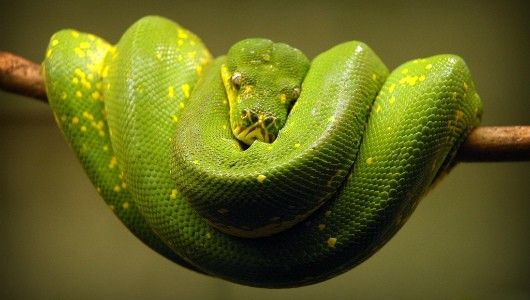 What did St. Patrick have against #snakes?