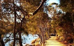 Sydney Walks - WeekendNotes