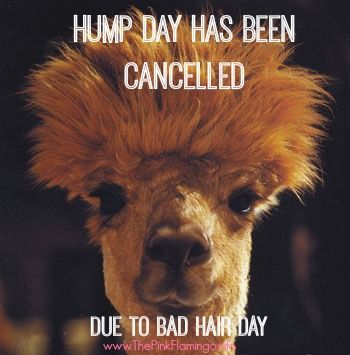 47 Best Images About Hump Day On Pinterest Wednesday