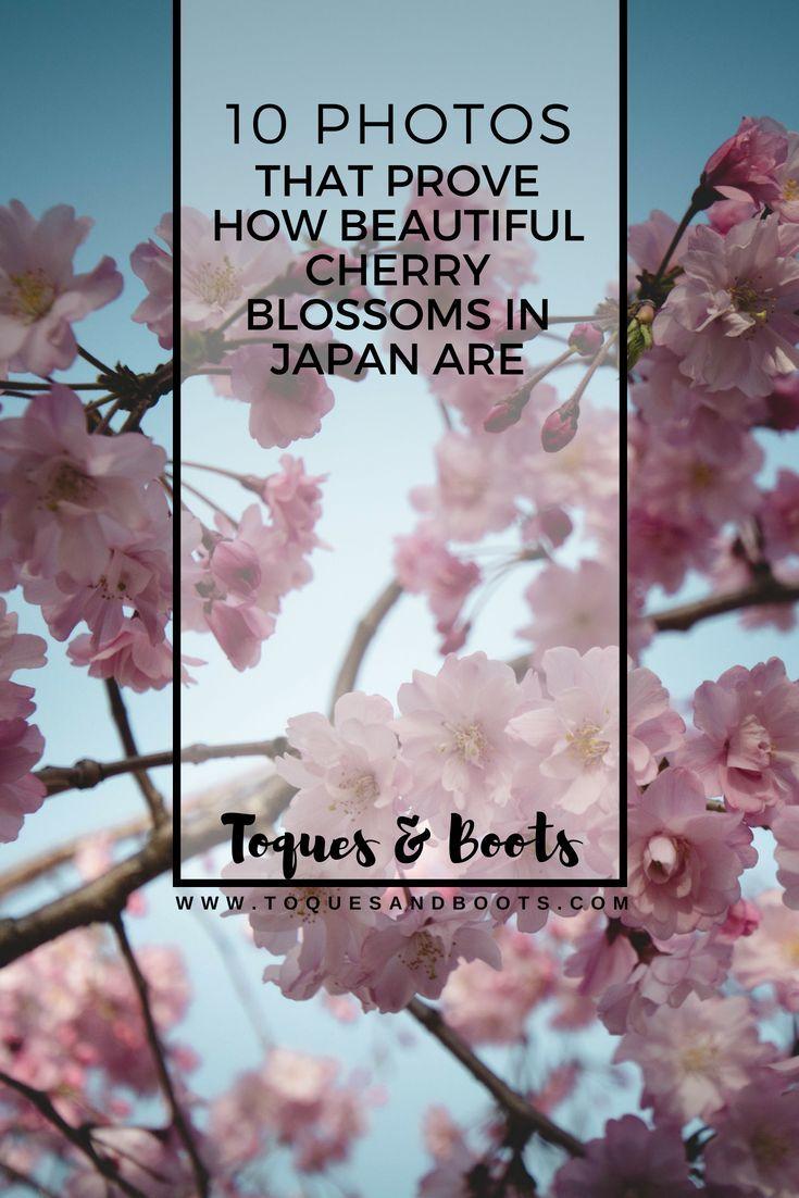 What Does Sakura Really Mean In Japanese Cherry Blossom Japan Sakura Sakura Flower