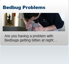 Bedbug Removal London  We are specialist in Bed Bug removal and offer both domestic and commercial clients a complete integrated pest management strategy to solve Bed Bug problems in London.