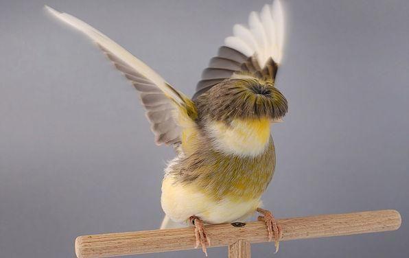 Pin Di Koleksi Foto Burung Aneh Tangkas Dia