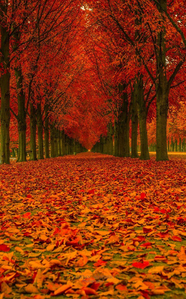 Beautiful Autumn Sunset: 556 Best Autumn ~ Splendor Images On Pinterest