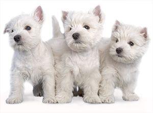 Royal Canin Kasvattajakerho on tarkoitettu kaikille suomalaisille kissan- ja koirankasvattajille. http://www.royalcanin.fi/kasvattajat/kasvattajat/royal-canin-kasvattajakerho