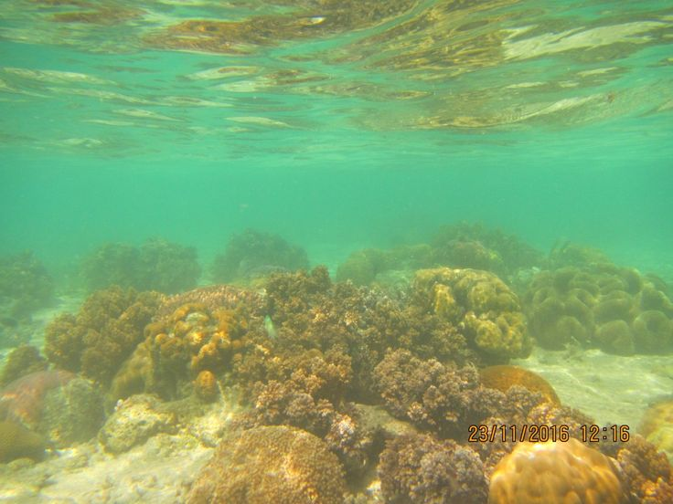 Pearl Jewelry  coral right next to pearl farms in palawan philipines