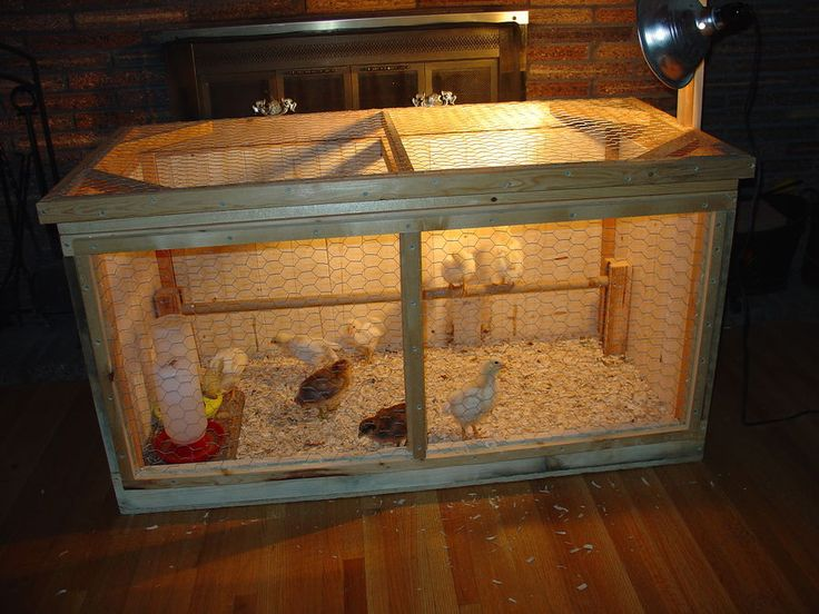 Pheasant Brooder Box Crazy For Chickens Pinterest