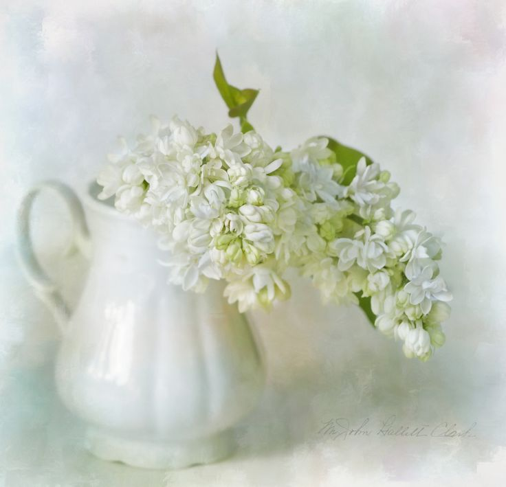 Fotografia white lilac de Lizzy  Pe  na 500px