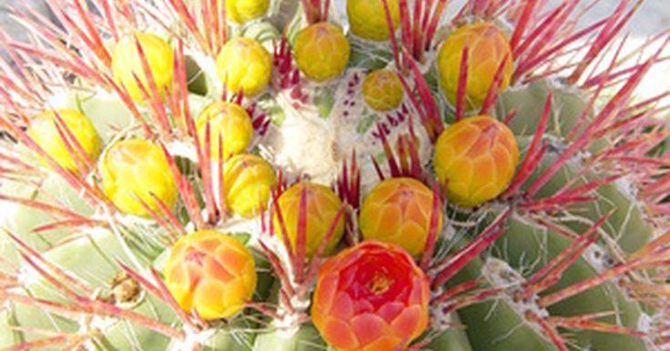Cactus del desierto. Con picos inusuales y una amplia variedad de formas, los cactus han cautivado a la gente por siglos. El escudo de armas de México tiene un águila sobre un cactus, agarrando una serpiente. Muchas variedades de cactus se encuentran de hecho en las zonas desérticas de México, así como en el sureste de California, Arizona y partes del oeste de Texas y ...