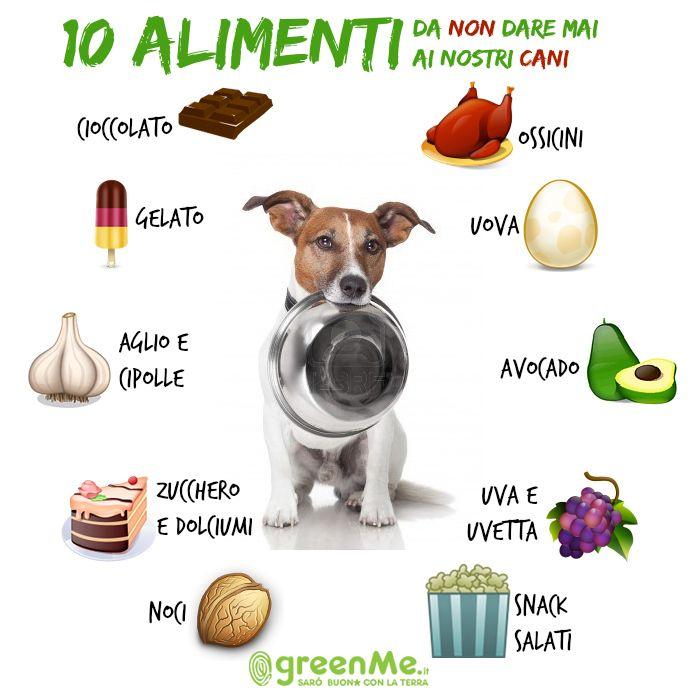 10 alimenti da non dare mai ai nostri cani