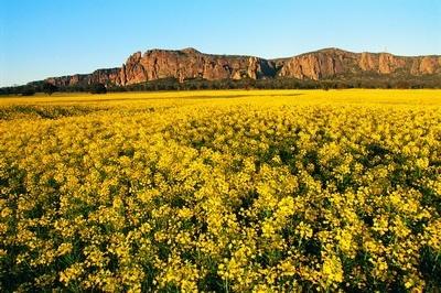 Mt Arapiles, Grampians, Victoria state, Australia