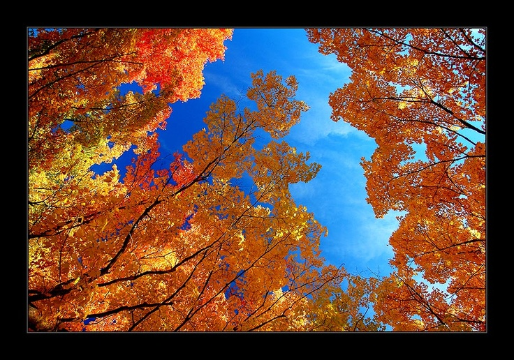 Autumn - Yuri Bonder