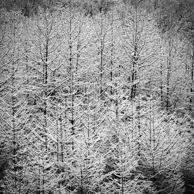 온 세상이 하얗게 눈이 내리던 날 아침, 나는 여느날과 같이 눈물이 맺히도록 크고 긴 하품을 해댔다. #네오페슬 #neopencil #눈 #snow #나무 #tree