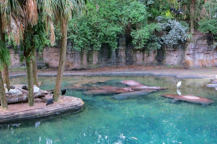 Disney's Animal Kingdom (Orlando) - qué saber antes de ir - TripAdvisor