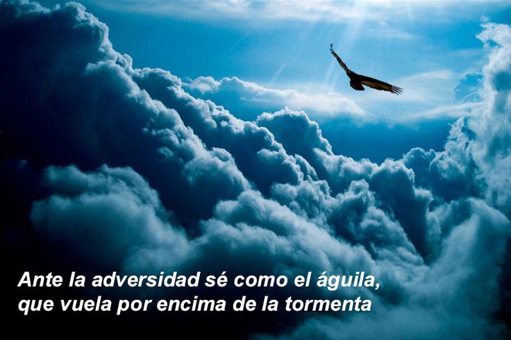Ante la adversidad sé como el águila, que vuela por encima de la tormenta.