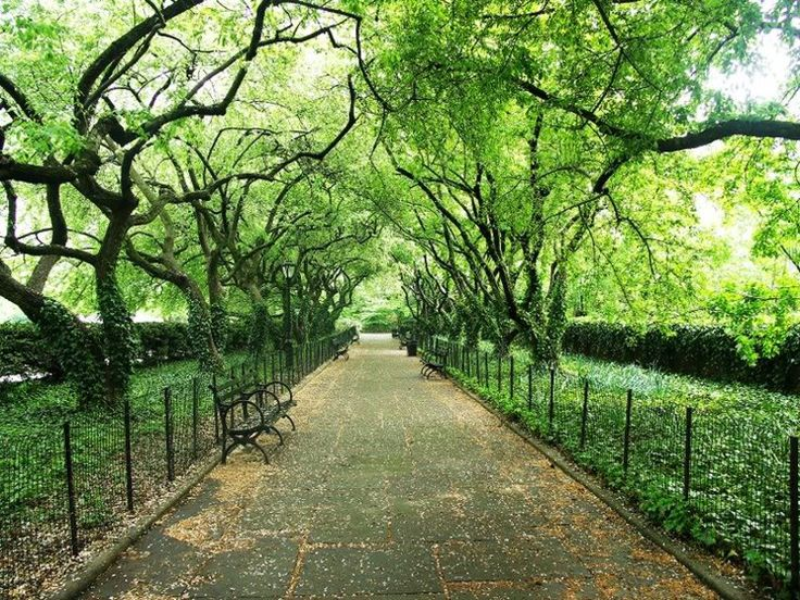 Une promenade dans Central Park, New York Ci... Wallpaper