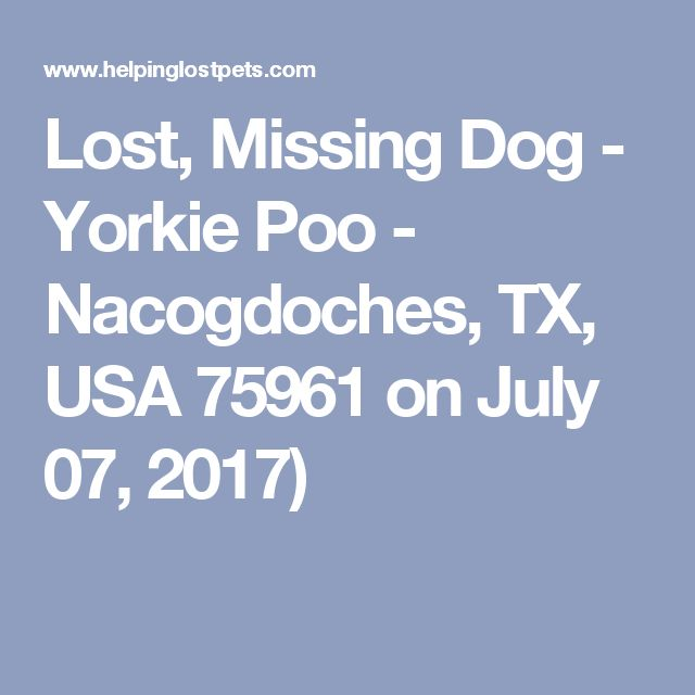 Lost, Missing Dog - Yorkie Poo - Nacogdoches, TX, USA 75961 on July 07, 2017)