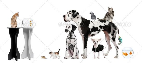 Group portrait of animals in front of black and white background by Lifeonwhite. Group portrait of animals in front of black and white background