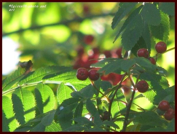2008 berries series by Heli Aarniranta on ARTwanted