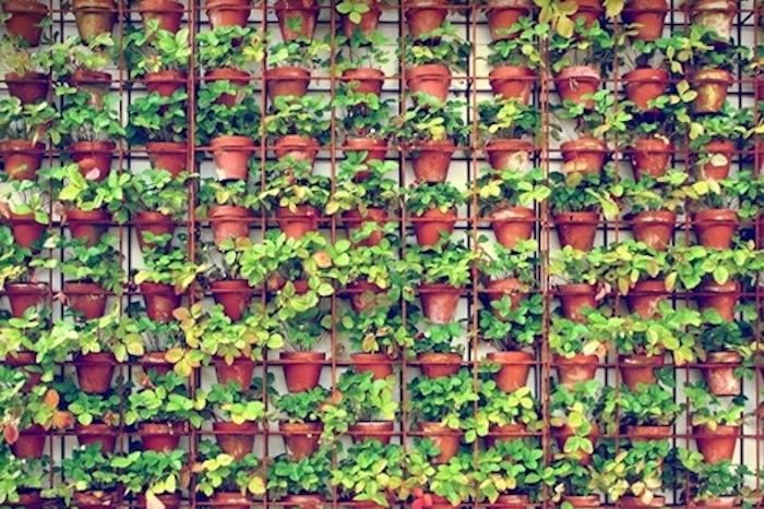 From Australia, eco-designer Joost Bakker offers home gardeners small-scale versions of the massive steel and terracotta vertical gardens that cover the facades of his popup Greenhouse restaurants and his own house
