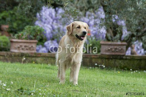 Portrait of a #dog