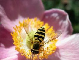 Bees only sting when they feel threatened.