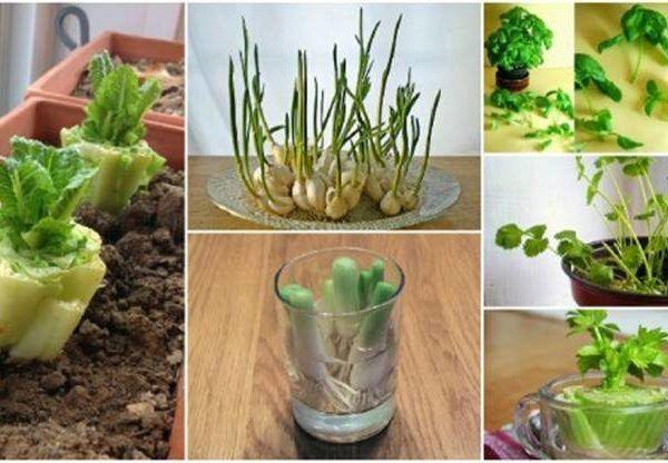13 druhov zeleniny, ktorú vypestujete aj z odrezkov a zbytkov znovu a znovu