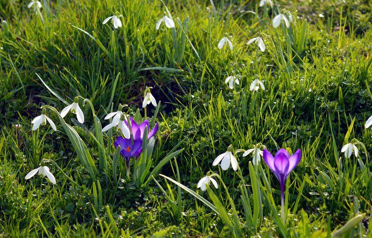 Najpiękniejsze ogrody – trawa ozdobna do ogrodu, trawa dekoracyjna, trawnik #trawa #trawnik #trawa #ozdobna #ogród #ogrody #ogrodnictwo #zielen #trawka #pomyslu #aranzacje #zdjecia #ogrodu #piekne #najpiekniejsze #garden #gardeners #grass #flower #ideas #summer #spring #best #photos #photo #picture #green #house #home #decor #pampasowa #krokusy #stokrotki #daisy #łąka