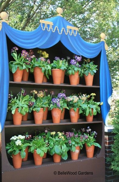 162 Best Auricula Theatres Images On Pinterest Flowers