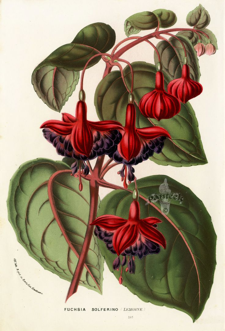 best floral drawing images on pinterest botanical drawings