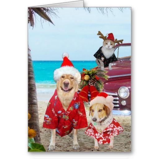 Funny Lab/Dog and Cat Hawaiian/Surfer Christmas Greeting Card