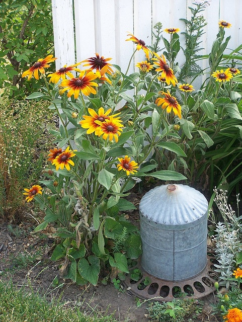 10 best olive bucket ideas images on pinterest olive for Old chicken feeder ideas