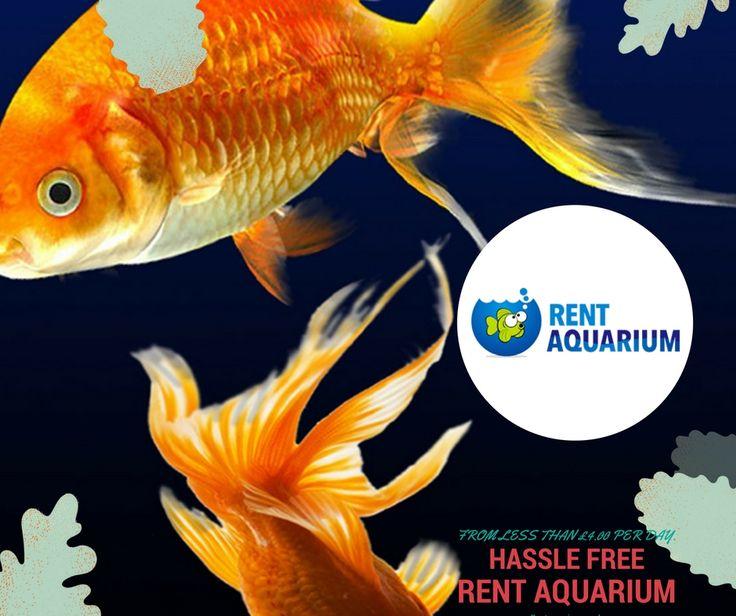 Do you know: Aquariums provide potential health benefits #RentanAquarium Now http://rentaquarium.co.uk/