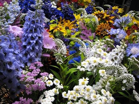 life gardening article loving plants