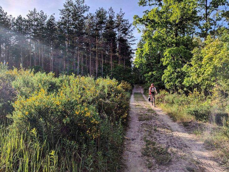 Sakwy na piasku potargał las. #neirawypełzaznory z @johnnybongo  #rower #rowerowo #rowery #instarower #rowerzystka #rowerzyści #las #bicycle #bicyclelove #cyclist #bicycling #instabicycle #bicyclelife #bicyclelovers #cyclinglife #bicycles #cyclinggirl #bicycleride #forest