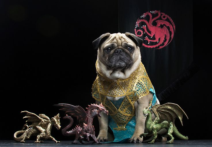 Daenerys targaryen pugs cute pugs pugs dressed up