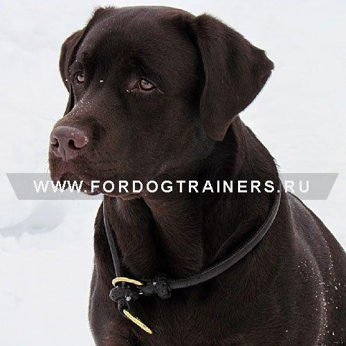 Кожаный ошейник удавка для дрессировки и воспитания собак - C97 -> 2046.40 руб.