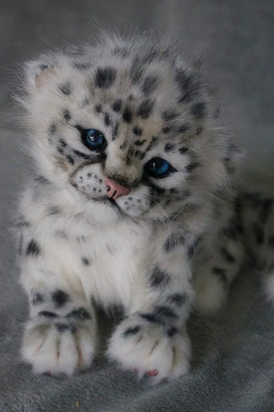 A Snow Leopard Cub.:                                                                                                                                                      More