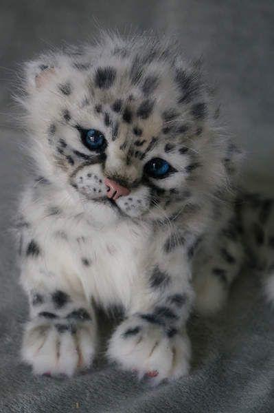 A Snow Leopard Cub.:                                                                                                                                                      More