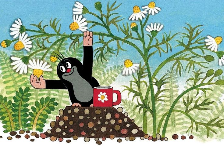 Krtek / Little Mole created by Czech animator Zdeněk Miler was one of my childhood favorites <3