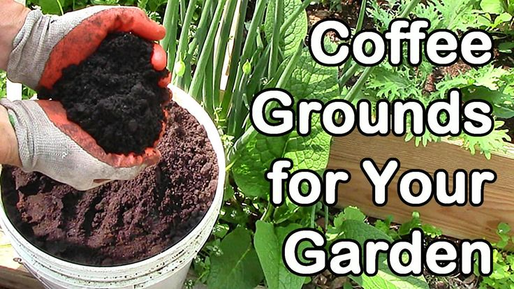 How Do We Use Coffee Grounds in the Garden