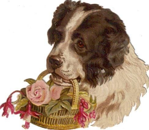 Victorian Die Cut Scrap Newfoundland Dog carries Rose Basket c1880