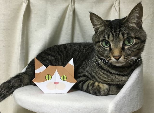 Hi, I'm Myu!  Posing with Hana the origami cat. Catchyの折り紙は5種類の猫さんがいるよ! この子は、はなちゃん! #cat #neko #catsofinstagram