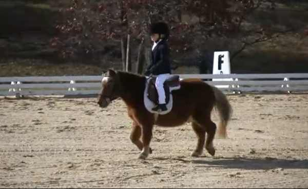 The Most Adorable Dressage Video Ever