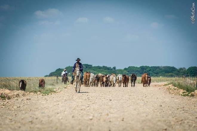 Cowboy in  Los Llanos, Colombia (©photocoen)