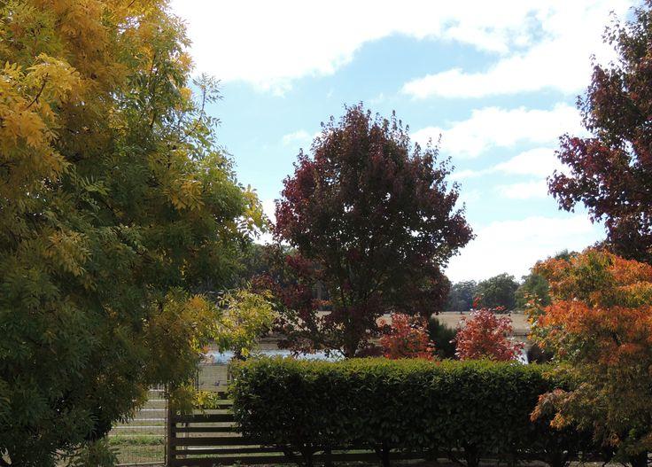 Beautiful Autumn Colour