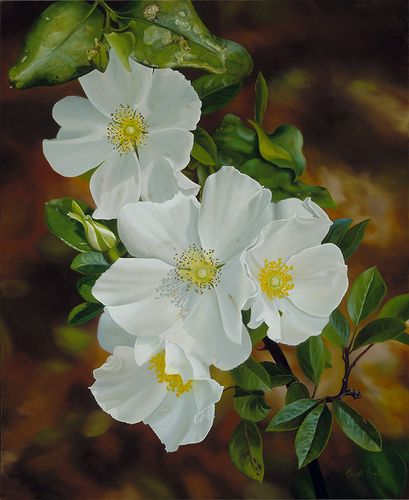 inkspired musings: Georgia On My Mind with a Cherokee Rose