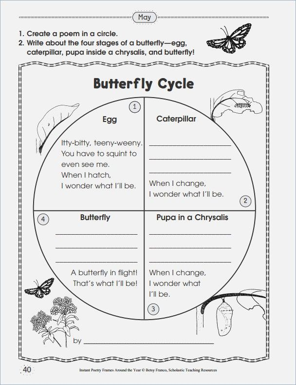 Butterfly Life Cycle Worksheet 2nd Grade – webmart.me ...