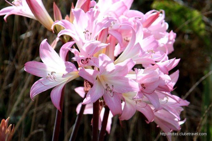 Flores naturais da Ilha da Madeira, Portugal - Photos Book Hotel Fortaleza